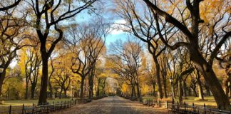 Manage-Your-Trees-in-the-Commercial-Places-on-readcrazy
