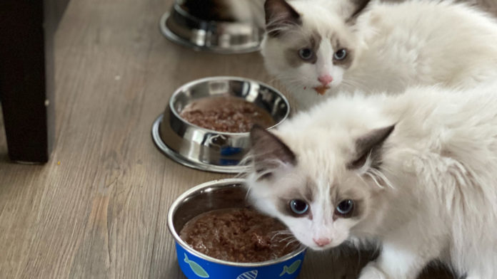 Your-Ultimate-Pet-Food-Bowl-Buying-Guide-In-2021-on-readcrazy